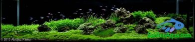 400L Aquatic Garden Native land