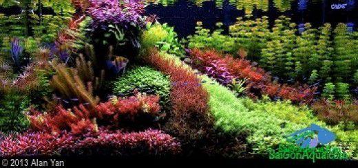 Phong cách thủy sinh_trồng cây thủy sinh