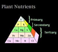 essential-elements-for-plant-growth- trồng cây thủy sinh