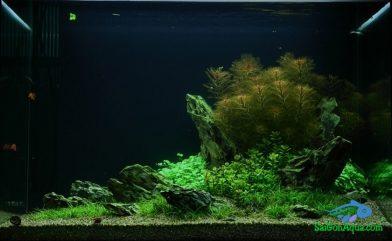 Cách làm hồ thủy sinh đẹp