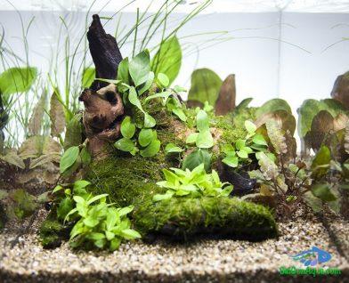 Cách làm hồ cá thủy sinh mini